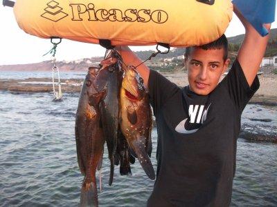 algérie 2011