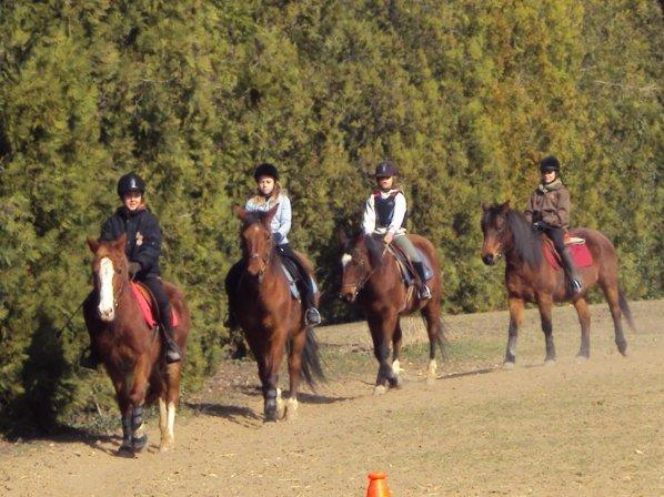 J'ai Apppri a aimer les chevaux, pas l'equitation .. ♥