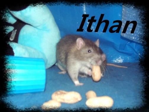 Ithan