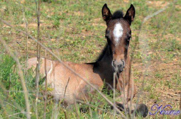 """Photos de chevaux, """"Cheyenne"""" le 25/05/12"""