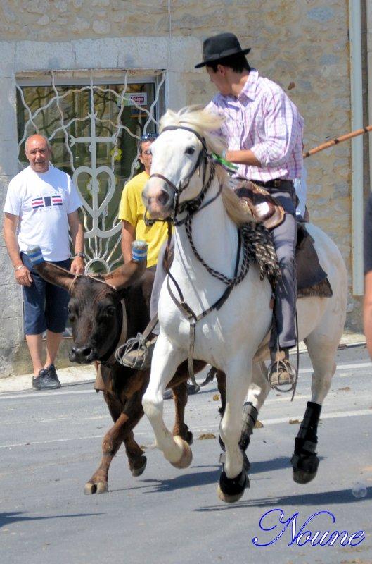 Saint Aunes; Concours d'abrivades le 26/05/12