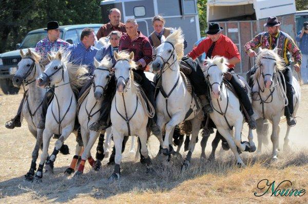 Montagnac; 26ème concours d'abrivades le 02/09/12