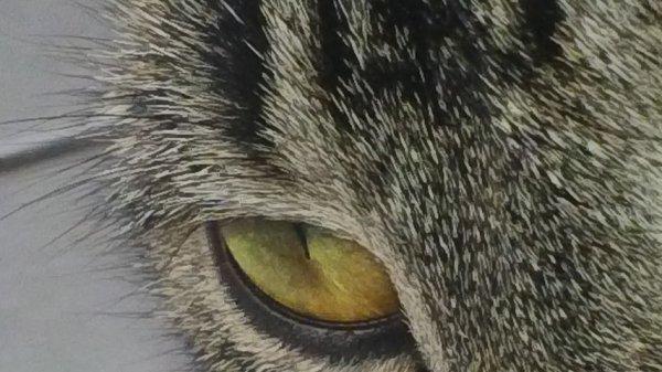L'oeil de mon chat <3