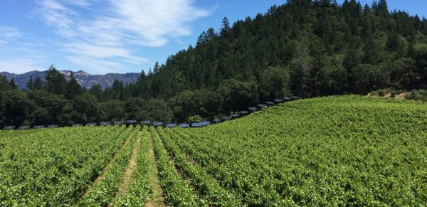 Napa Valley's Luxury Winery Experiences