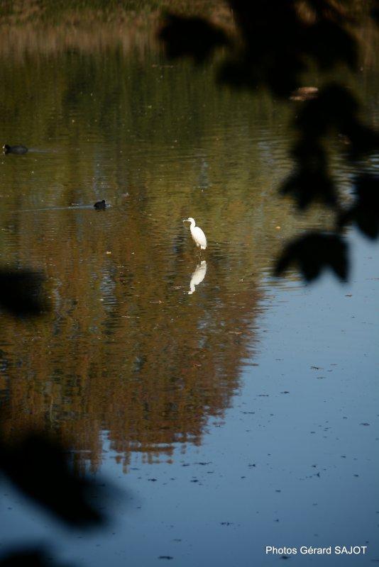 Voici le  très beau parc naturel de la ville de Meaux .