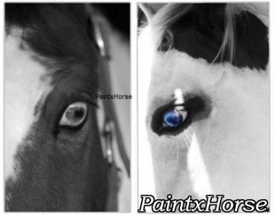 « Bienvenu dans le Royaume du Paint Horse »