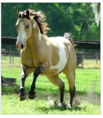 « L'histoire du Paint Horse »