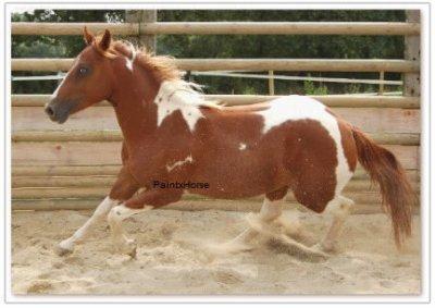 « D'écri le Paint Horse !! »