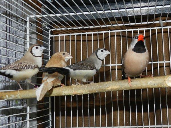 nouveau oiseaux