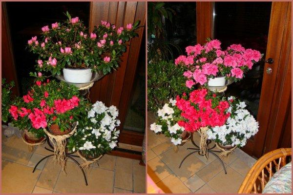 bouquet d azalee
