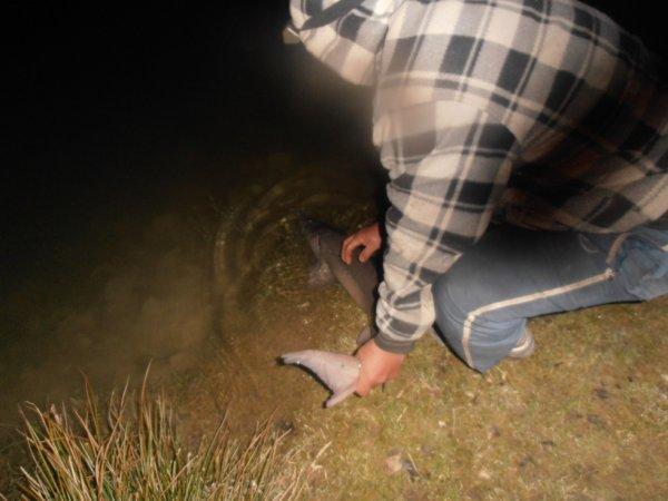 remise a l'eau du premier poisson 2013