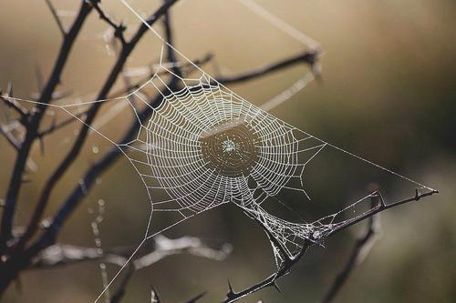 """_ _ """" Spider web""""  la vie est une toile d'araignée... on ne vit qu'une fois _ _"""