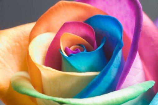 le désire est aussi précieux qu une roses ....