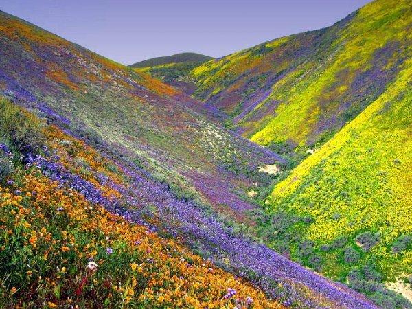 la vallee des fleurs   INDE