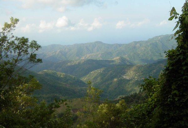 blue mountains jamaica <3