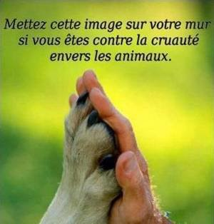 LES ANIMAUX SONT DES ÊTRES VIVANTS !!!!