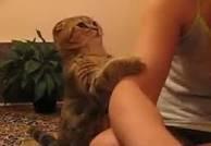 Mon chat d'amour <3 qui fait je c pa koi sur le bras de mon chéri :-P