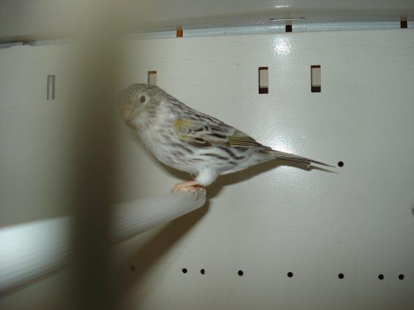 femelle agate m.j 2012