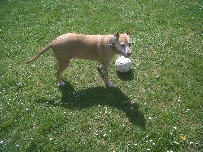 ma chienne!!!!!!!!!!