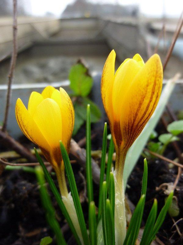 un brin de printemps, enfin!!