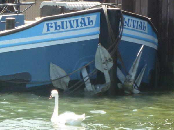 le FLUVIAL est en fait le TOURISME-FLUVIAL!