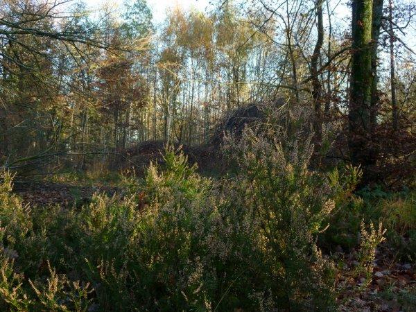 les Faux de Verzy - Montagne de Reims