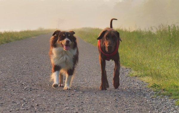 la promenade du matin