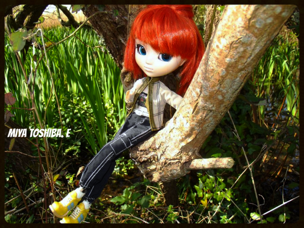 Miya perché sur un arbre