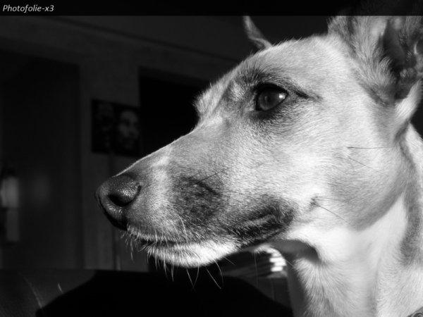 """""""Dur de faire confiance en l'être humain, même les aveugles préfèrent être guidés par des chiens"""""""