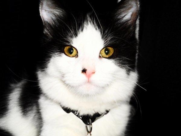 « Il suffit de croiser son regard avec celui d'un chat pour mesurer la profondeur des énigmes que chaque paillette de ses yeux pose aux braves humains que nous sommes.  »