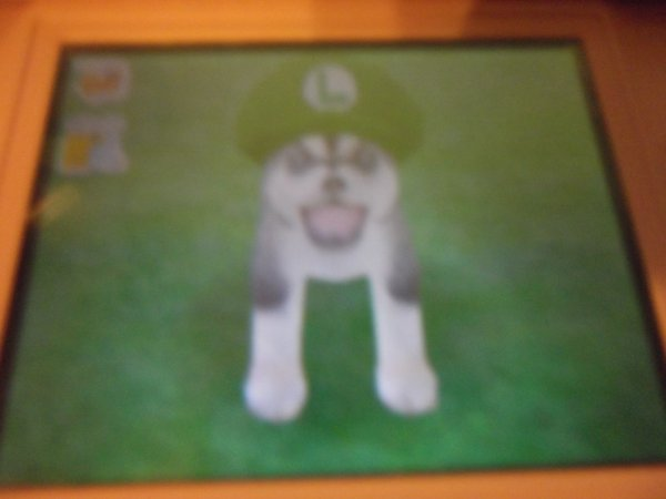 Mes chien (nintendogs dachshund & friends)