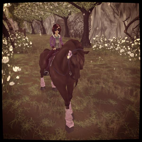 Mes trois chevaux