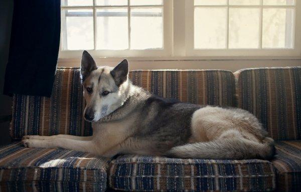 Notre chien Eclipse  (berger allemand) <3<3