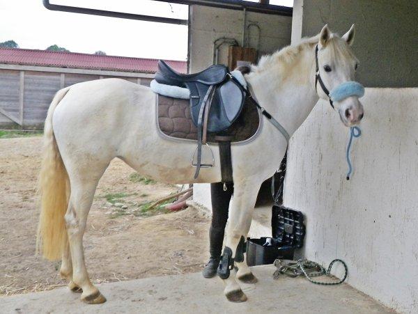 Cours d'Equitation
