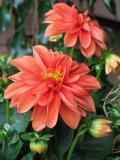 Photo de Flowers15-03