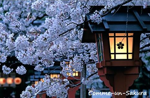 Comme-Un-Sakura