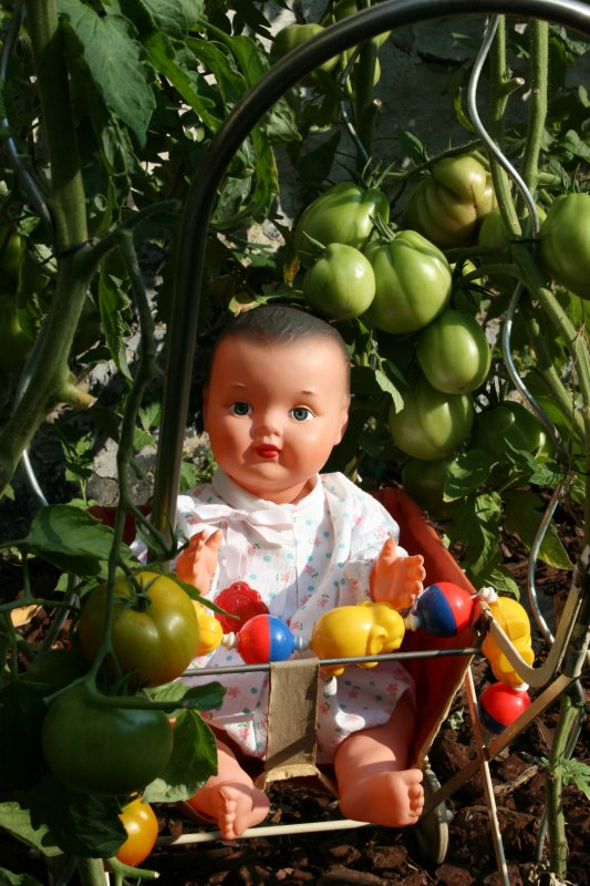 BABY DE CONVERT admire   les tomates