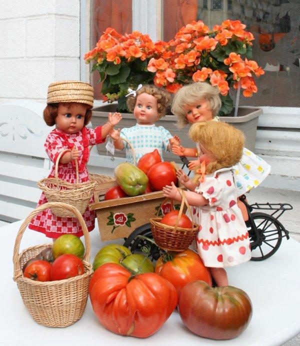 Aujourd'hui   Ermine ,  Nicole, Rey ,et Boum ceuillent  les  dernières tomates