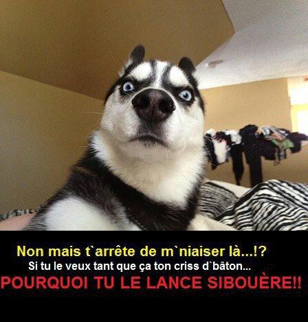 chien loll