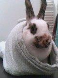 Photo de tout-sur-les-lapins15