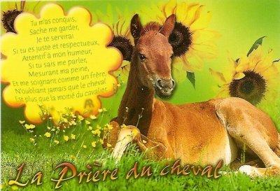 prère du cheval