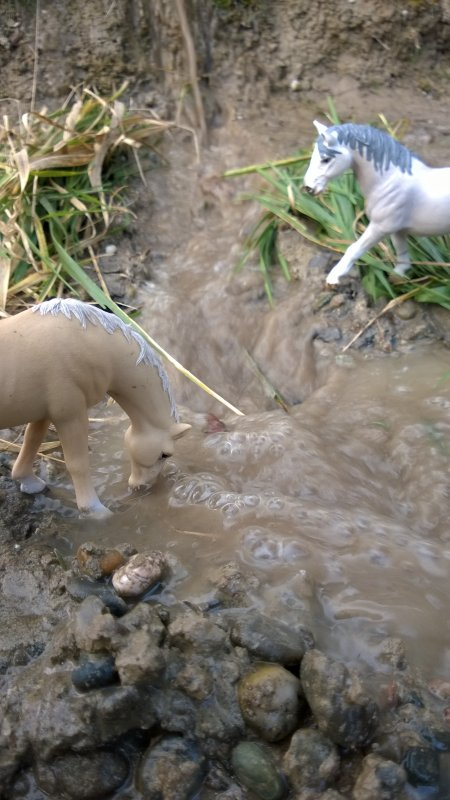 Les Chevaux au bord de l'eau !