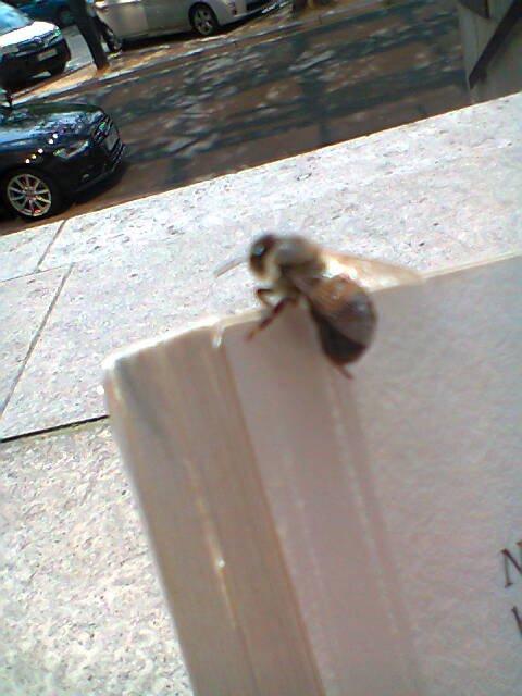 Boulevard de Waterloo : Bee&Me