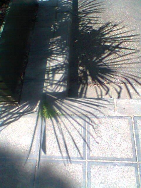 Chaussée de Charleroi - ombres de palmiers
