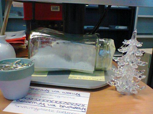 Affreux ours dans bocal de sucre (bureau d'une collègue)
