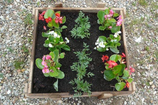 voici mes quelques fleurs