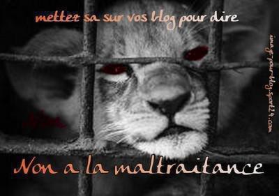 CONTRE LA MALTRAITANCE DES ANIMAUX!!!