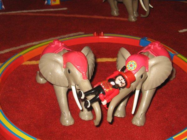 Les éléphants !!!!
