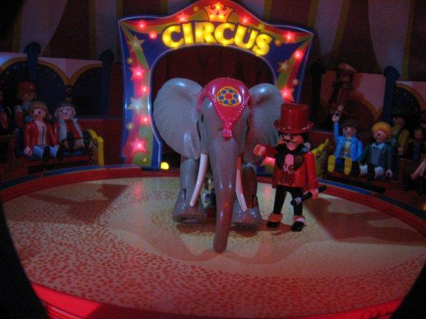 Les éléphants suite !!!