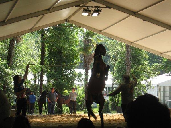 Reportage au Cirque National Alexis Gruss dans son parc à Piolenc dans le Vaucluse !!!